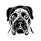 Портрет собаки породы bullmastiff Стоковое Фото