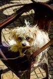 Портрет собаки сидит на стуле стоковое изображение