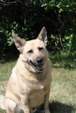 Портрет собаки сидя снаружи стоковое фото rf