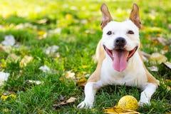 портрет собаки счастливый Стоковые Фото