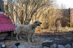 Портрет собаки Стоковое Фото