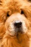 портрет собаки Стоковое Изображение