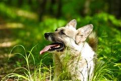портрет собаки Стоковые Изображения RF