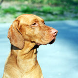 портрет собаки Стоковые Фото