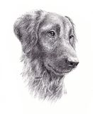 Портрет собаки Стоковые Фотографии RF