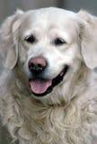 портрет собаки 3 крупных планов Стоковые Изображения