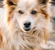Портрет собаки Стоковая Фотография
