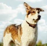 портрет собаки breed смешанный стоковое изображение