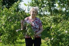 Портрет старой усмехаясь женщины в gargen Стоковые Фото