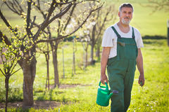 Портрет старшего садовника в его саде Стоковое фото RF