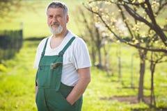 Портрет старшего садовника Стоковая Фотография