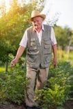Портрет старшего человека смотря камеру в огороде стоковые фото
