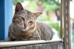 портрет старший y kuzia o 12 котов Стоковая Фотография RF