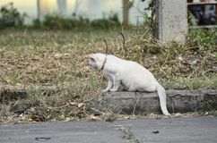 портрет старший y kuzia o 12 котов Стоковое Изображение RF