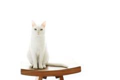 портрет старший y kuzia o 12 котов Стоковые Изображения