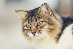 портрет старший y kuzia o 12 котов Стоковые Фото