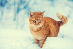 портрет старший y kuzia o 12 котов Стоковое фото RF