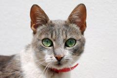 портрет старший y kuzia o 12 котов Стоковая Фотография