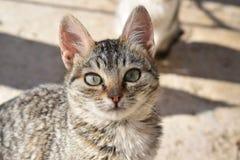 портрет старший y kuzia o 12 котов Стоковые Фотографии RF
