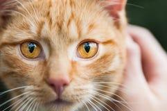 Портрет стороны кота имбиря с деталью глаза Стоковая Фотография