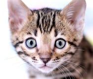 Портрет стороны котенка Стоковая Фотография