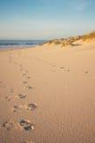 Портрет следов ноги и дюн Стоковое фото RF