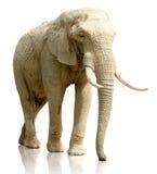 Портрет слона Стоковые Изображения