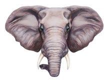 Портрет слона Стоковые Фото