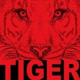 Портрет тигра притяжки руки Оно может быть использовано для дизайна сумки, открытки и плаката также вектор иллюстрации притяжки c Стоковое Фото