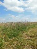 Портрет травы и неба Стоковое Изображение RF