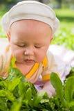 портрет травы младенца лежа Стоковое Изображение