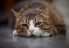 Портрет унылого striped кота Стоковые Изображения