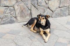 Портрет унылой бездомной собаки дальше outdoors Стоковые Фотографии RF