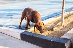 Портрет унылой бездомной собаки Стоковые Фотографии RF