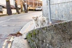 Портрет унылой бездомной собаки Стоковое Фото