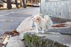 Портрет унылой бездомной собаки Стоковые Изображения