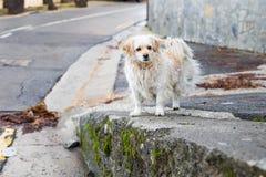 Портрет унылой бездомной собаки Стоковая Фотография
