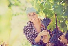 Портрет усмехаясь женского работника на ферме виноградины стоковая фотография