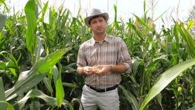 Портрет фермера переплетая в мозоли руки пробует зерна на вкусе акции видеоматериалы