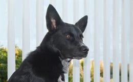 портрет черной собаки стоковые фото