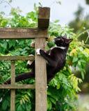 Портрет черно-белого кота взбираясь на перголе сада стоковая фотография rf