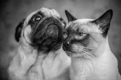 Портрет черно-белый, стильное приятельство o собаки и кошки фото Стоковая Фотография