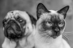 Портрет черно-белый, стильное приятельство o собаки и кошки фото Стоковые Фотографии RF