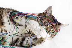 Шаловливый кот Стоковая Фотография