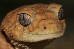 Портрет ящерицы Стоковое Изображение RF