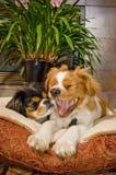 портрет 8 собак Стоковые Фото