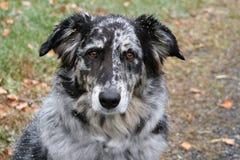 портрет doggie Стоковые Фото
