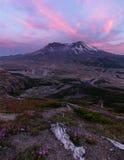 Портрет Mount Saint Helens и Wildflowers на заходе солнца стоковые изображения rf