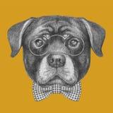 Портрет Rottweiler с стеклами и бабочкой Стоковые Фотографии RF