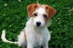 портрет s собаки Стоковое Изображение